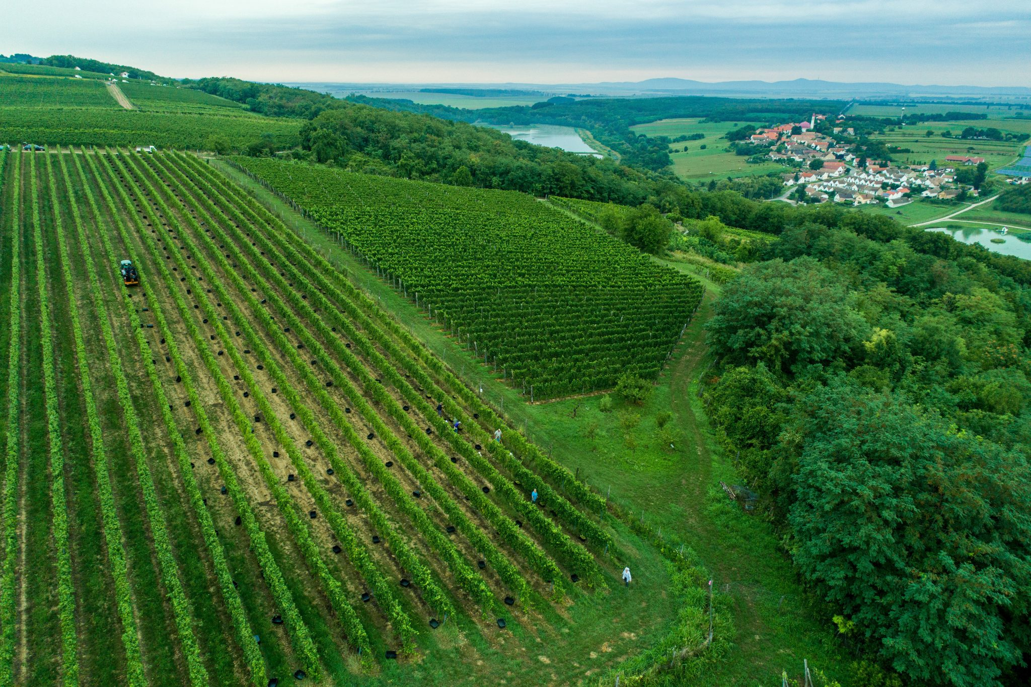 Villány Wine Region: A Touch of Peace post's picture