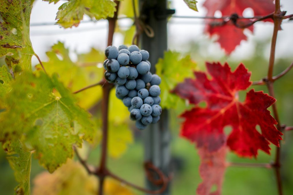 As The Globe Heats Up, Is Hungarian Wine in Danger? post's picture