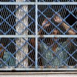 Hungary Introduces Stricter Parole Rules