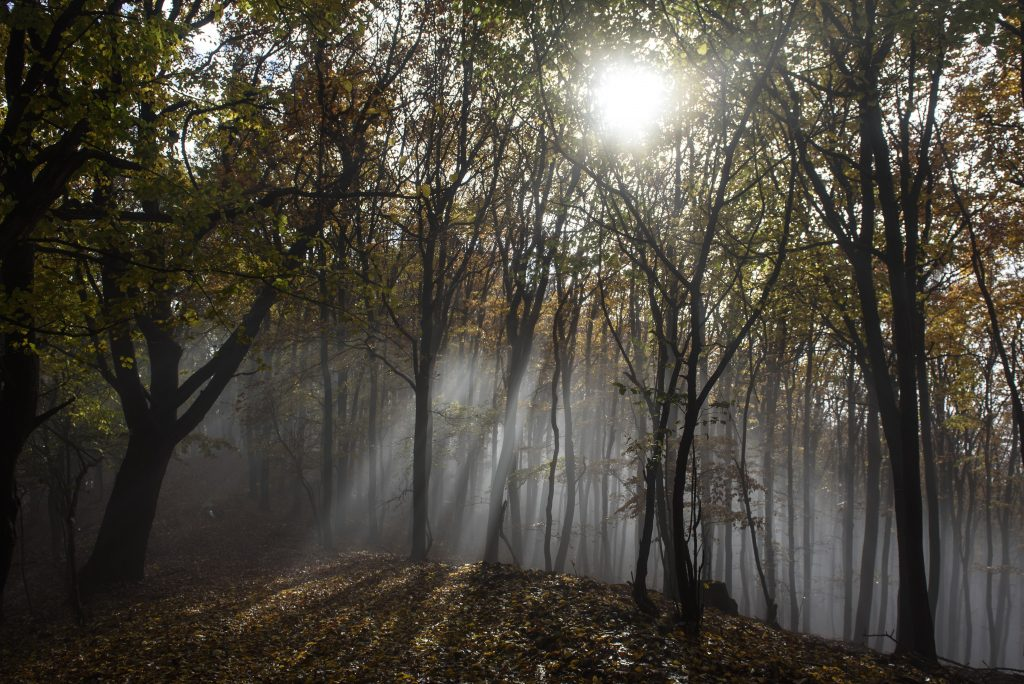 Hungary Co-signs Letter Calling for Review of EU Forestry Strategy post's picture