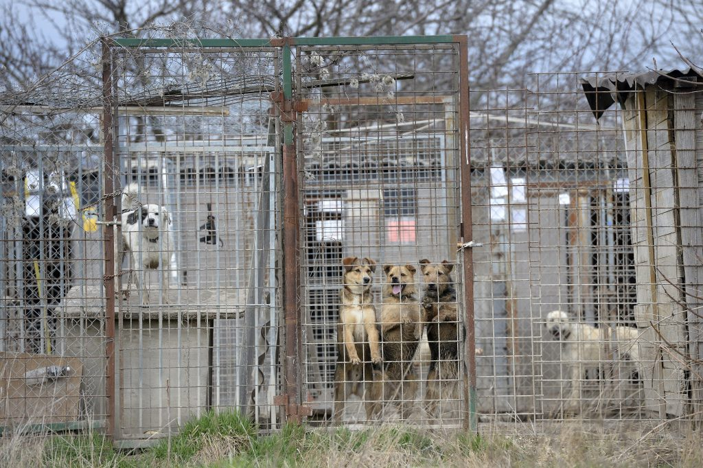 Hungary Pet Trade to Be Regulated from April post's picture