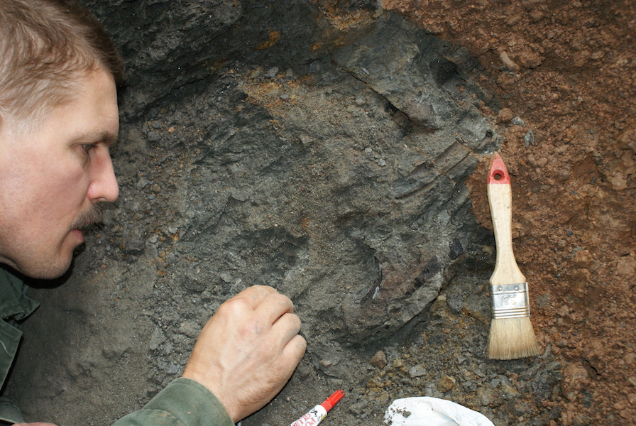 Hungarian-led Team Rediscovers 'Magyarosaurus' Dinosaur Site in Transylvania post's picture