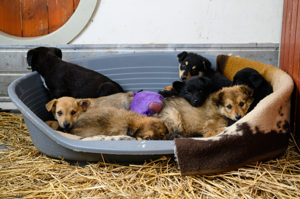 First Hungarian Animal Protection Code Completed post's picture