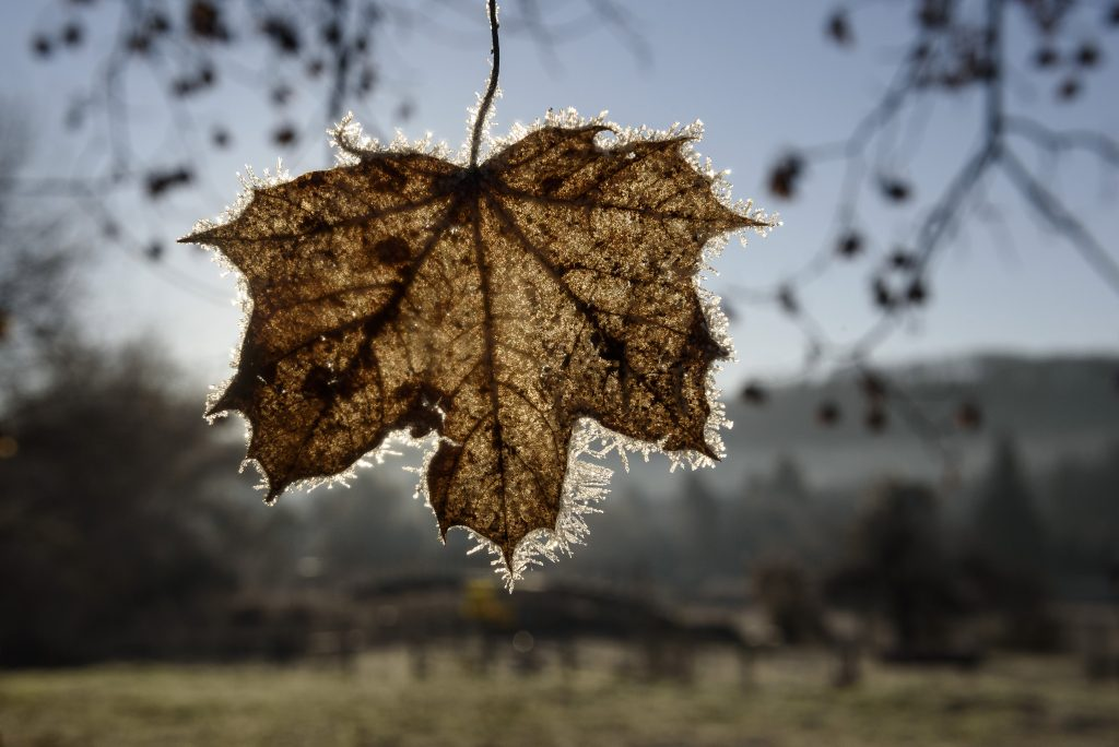 Winterlike Weather Expected in Hungary Over the Weekend post's picture