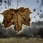 Winterlike Weather Expected in Hungary Over the Weekend