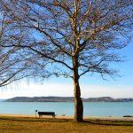 Exciting Programs Worth Checking Out This Autumn at Lake Balaton