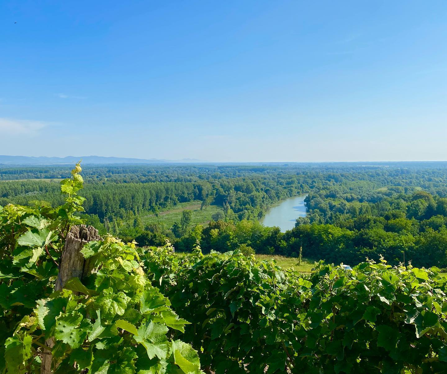 Hungarian Winery Among the World's Top 100 for the First Time